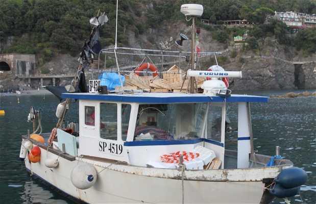 Tours en barco por las Cinque Terre desde Monterosso