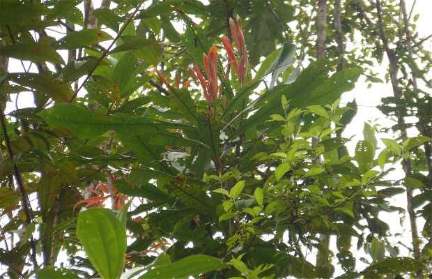 Bosque húmedo y tropical