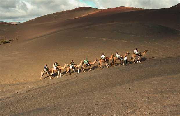 Escursione del Parco Timanfaya sul cammello