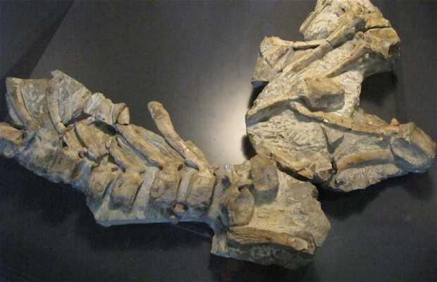 Museo de los Dinosaurios de Arén