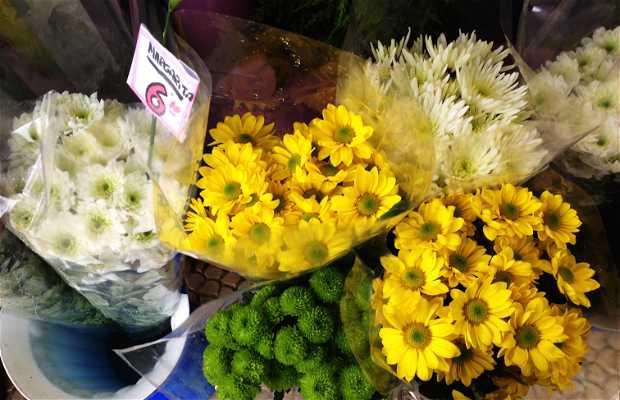 Flores Paqui