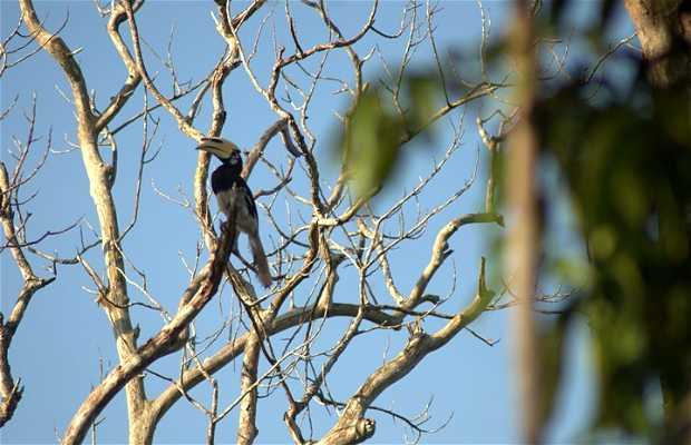 Caminar a través de los manglares