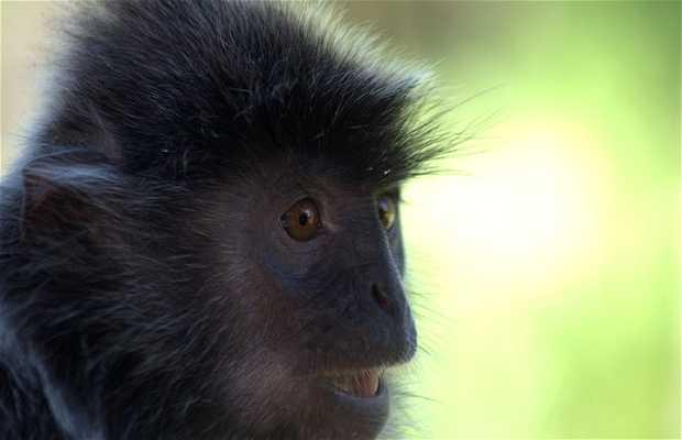 Santuario de los monos narigudos