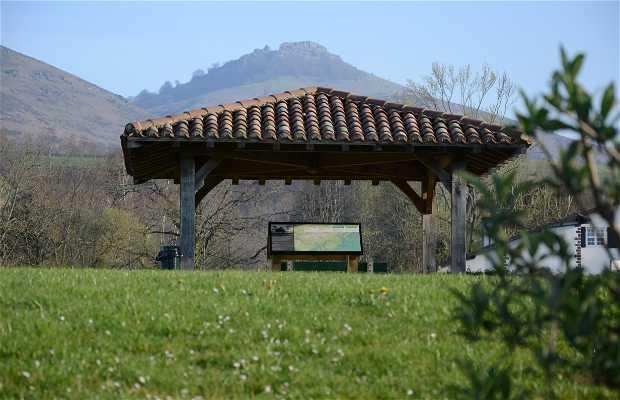 Arboretum del padre David