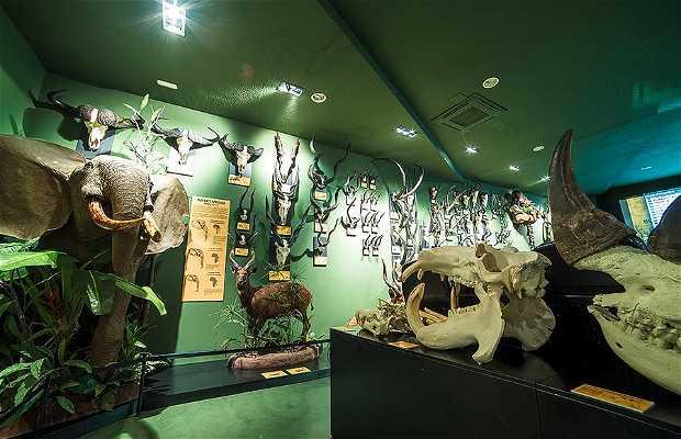 Museo de la Caza Los Yébenes
