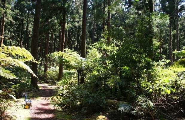 Bosque Bébour