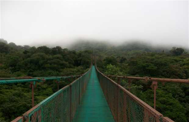 Puentes colgantes del selvatura