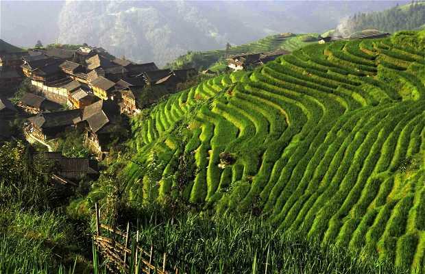 Terrazas de arroz de Pingnan
