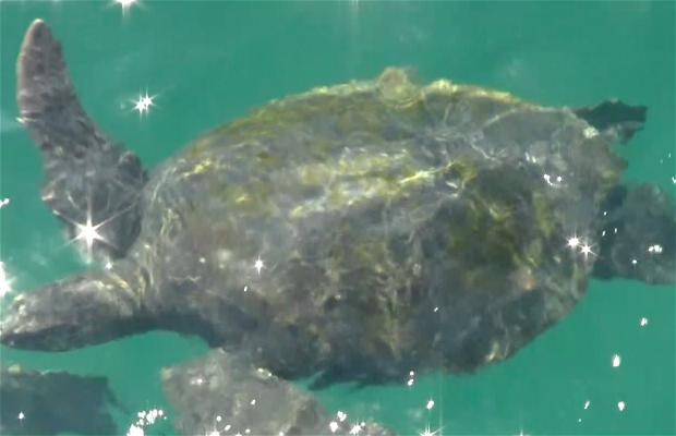 Baño con tortugas