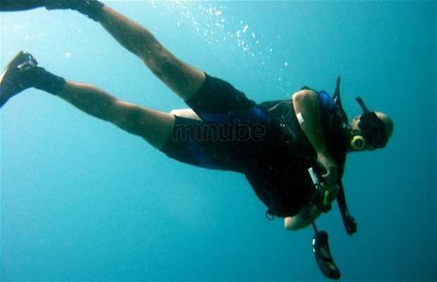 Paradise Diver