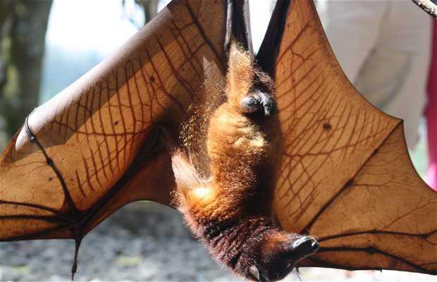 Pura Goa Lawah - Templo dos Morcegos