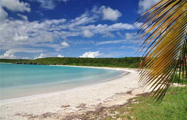 Île de Vieques