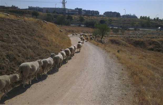 Carretera del Prado
