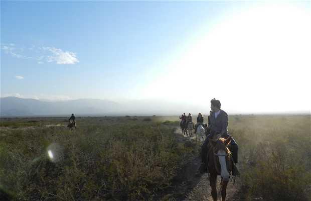 Cavalgada nos Andes