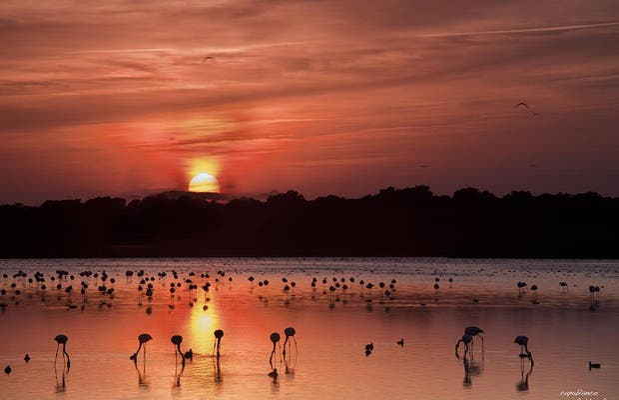 Reserva Natural Dehesa de Abajo