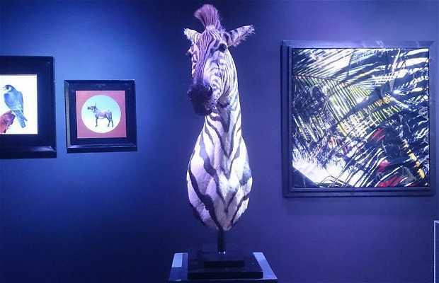 Galerie d'art Orsorama
