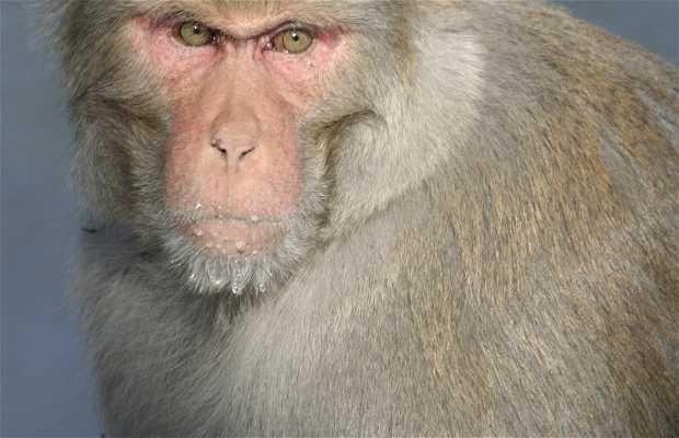 Macaco Llac Rewalsar