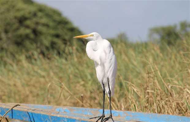 Observación de Aves en la Laguna de Unare