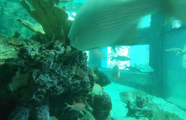 L'aquarium Oceanario