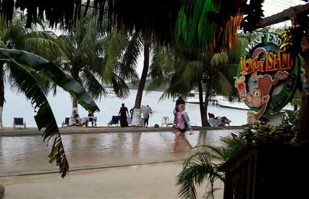 Monkey Island Beach Cafe