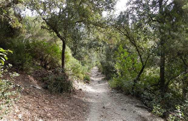 Arrêt à la Cerdanyola Vallvidrera