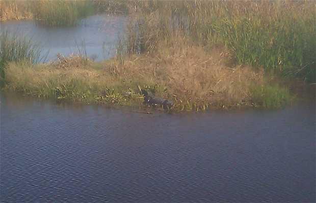 Brazoria National Wildlife Reserve