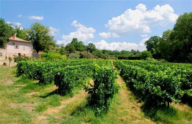 Vigne en Provence