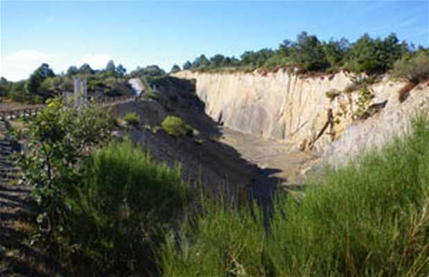 Ruta del Bosque Fósil