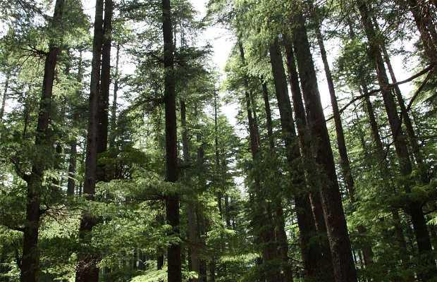 Bosque Dhungri Van Vihar