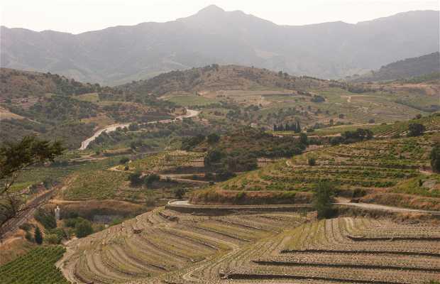 Le vignoble de Collioure à Banyuls