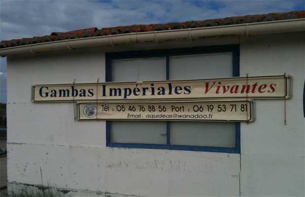 Gambas Bio chez Aquidéas