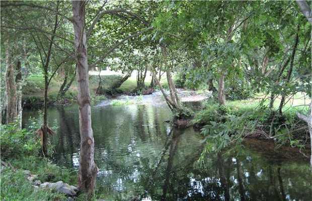 Rio Porcia