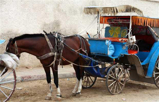 Carruajes de Essaouira