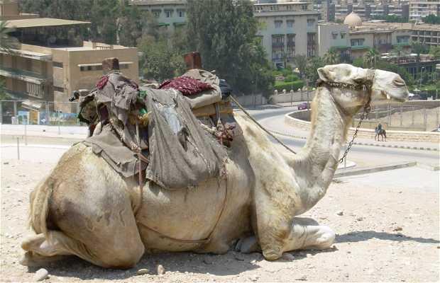Animales en Egipto