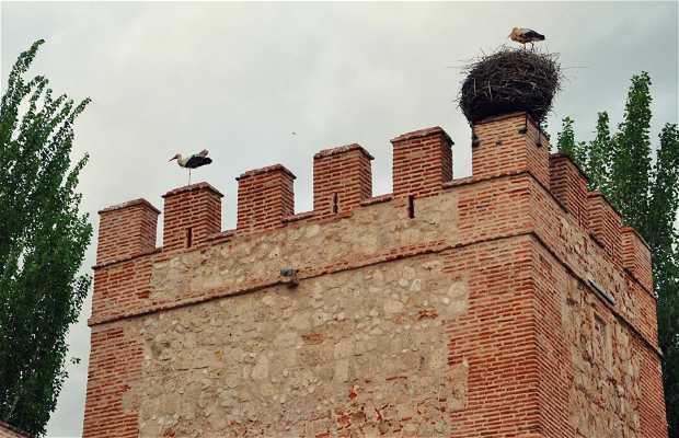 Torre XIV