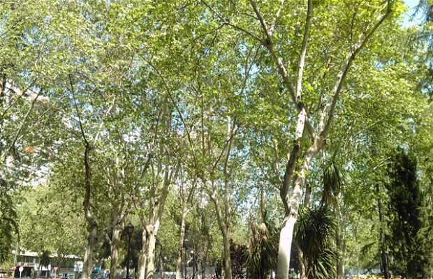 Jardines en la Avenida del General Perón