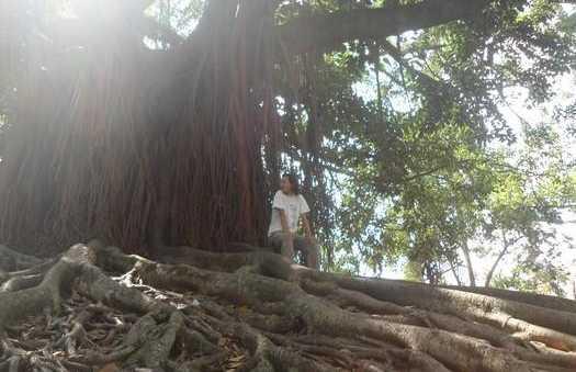 Árbol de San Antonio