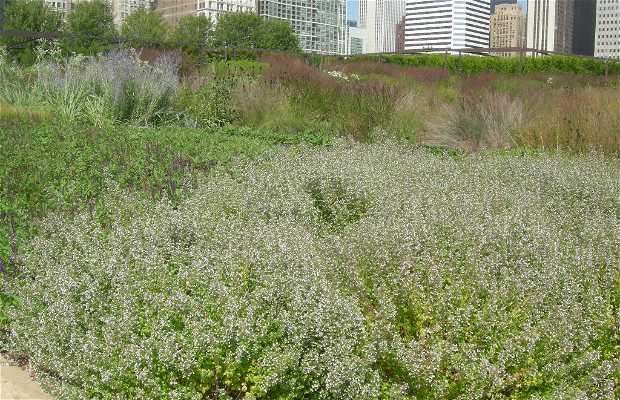 Lurie Garden a Chicago