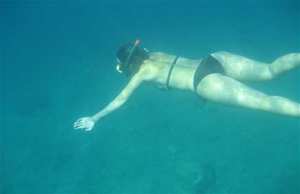 Snorkeling in Anse Noire