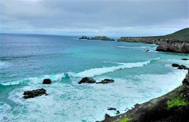 Peces Tropicales en Isla de la Plata