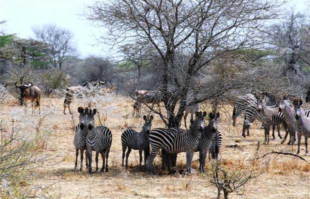 Safari fotográfico por la reserva de Selous