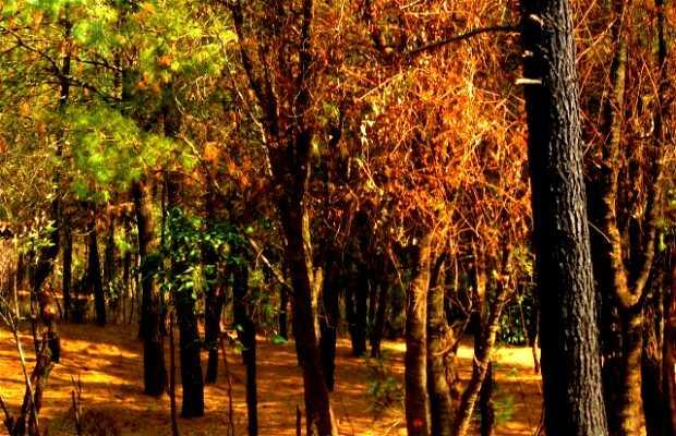Huitzilac Forest