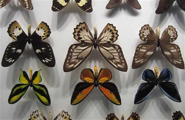 Museo di Storia Naturale di Toulouse
