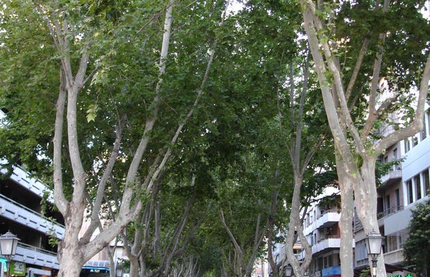 Paseo Alfonso X El Sabio