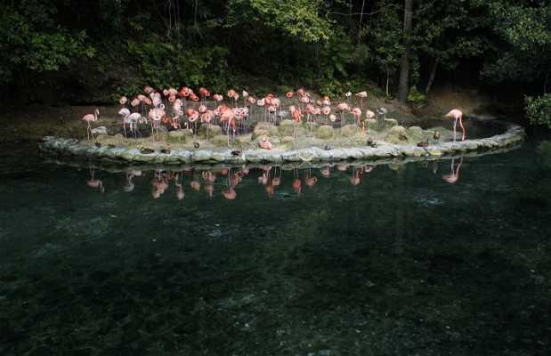 Zoo de Santo Domingo