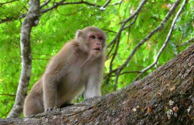 Cueva de los monos