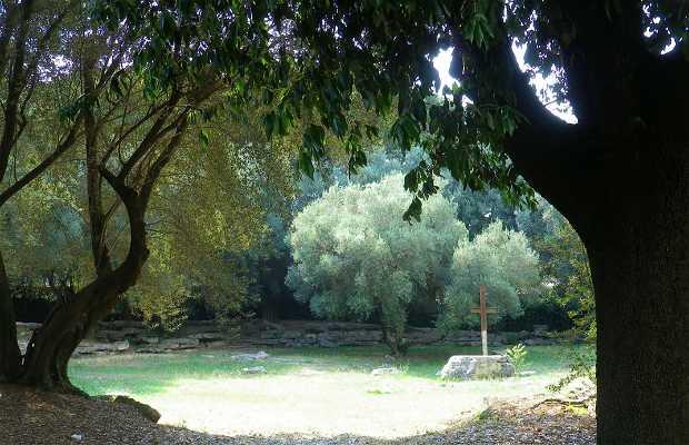 Giardino degli ulivi in monteviale restaurant reviews menu and
