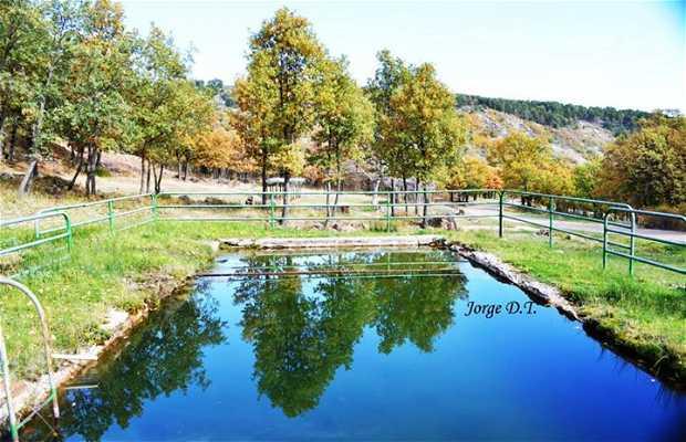 Fuente del Castillo Noguera de Albarracín (Teruel)