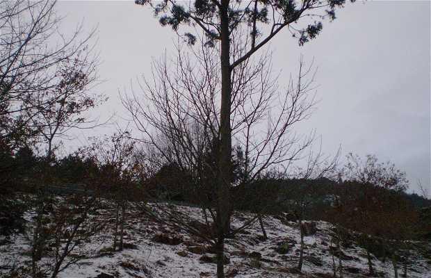 Nieve en las Rias Bajas