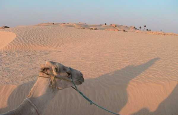 Oasis et déserts